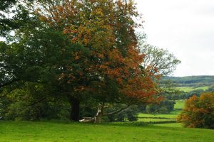 august-2011-autumn-colours-001